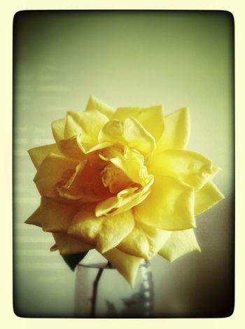 Una Flor Amarilla Para La Maga