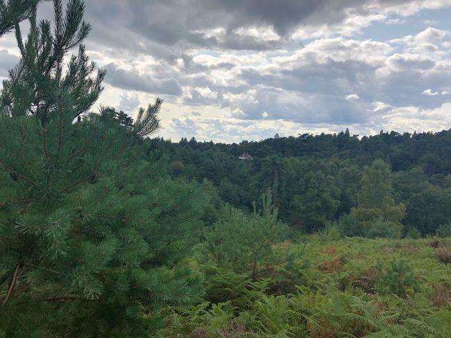 Hiking Nofilter Hiking Devils Punch Bowl Plant Tree Cloud - Sky Beauty In Nature Sky Growth Tranquility Green Color