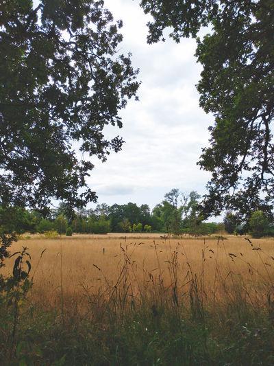 Field of Gold Nature Landscape Tree Rural Scene Agriculture Sky Farmland Farm Cultivated Land Plantation