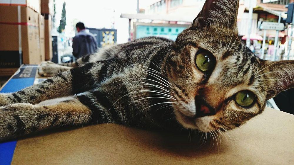 Cute? Pet Photography  Cat