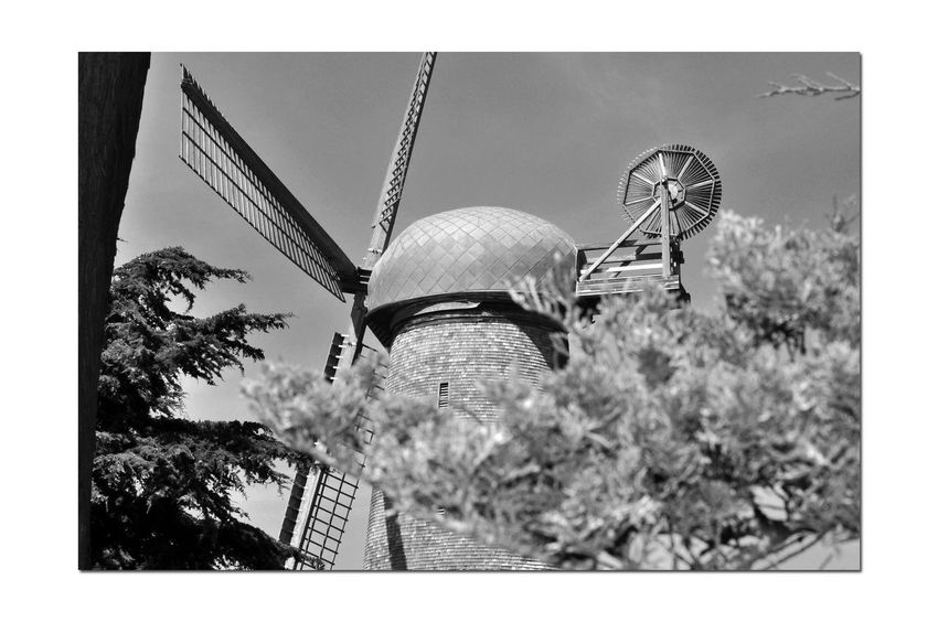 Dutch Windmill @ Golden Gate Park 6 San Francisco CA🇺🇸 North Windmill Dutch Windmill Built 1903 Western Edge Golden Gate Park 95 Ft. High 114 Ft. Sails Pumped 30,0000 Gallons Per Hour Irrigated The Park Wind Power Alternative Energy Engineering Marvel 1913 Replaced By Electric Pumps Fell Into Disrepair By 1950's In State Of Ruins Restoration Began 2000 Completed 2012 Landscape Windmill_Collection Monochrome Lovers Monochrome Windmill Photography Trees Black & White Black & White Photography Black And White Black And White Collection  Designated Landmark No. 147