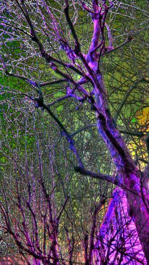 Nature Edits Trees Creative Shots Hdr Edit