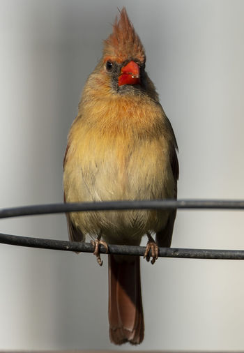 Close-up of bird perching on railing against wall