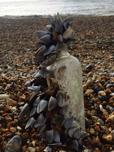 What you find at the beach Goose Barnacles Sealife Nature Taking Back Earth Bivalve Molluscs Nature Is Art Seaside Washed Up On The Beach Washed Up Marine Debris Beach Pebble Sea Nature No People Tranquility Outdoors Pebble Beach Close-up Beauty In Nature