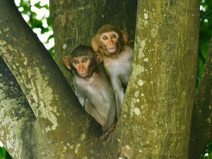 Monkeys sitting on tree