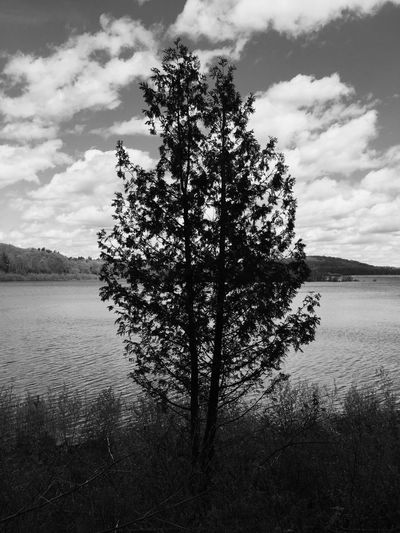 Tree Nature Lake Tranquility Sky Water Beauty In Nature Tranquil Scene Scenics Growth Cloud - Sky No People Outdoors Landscape Day Scenery Blackandwhite Black And White