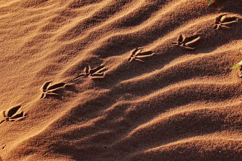 Bird tracks in the sand at sunset Diagonal Lines Side Lighting Bird Tracks In The Sand Sun And Shadow Texas Dunes High Angle View Sand Land Sunlight Full Frame Nature Backgrounds Beach Day No People Pattern Tranquility Landscape Textured  Shadow Outdoors Beauty In Nature Scenics - Nature Tranquil Scene