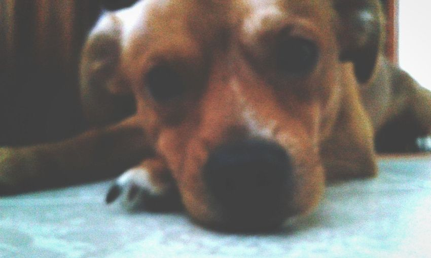 BLASTER ♥ Mydog♡ Cute Pets Verycool Yeah! Likes Followme Amazing Goodvibes✌️ Peace ✌ Blaster