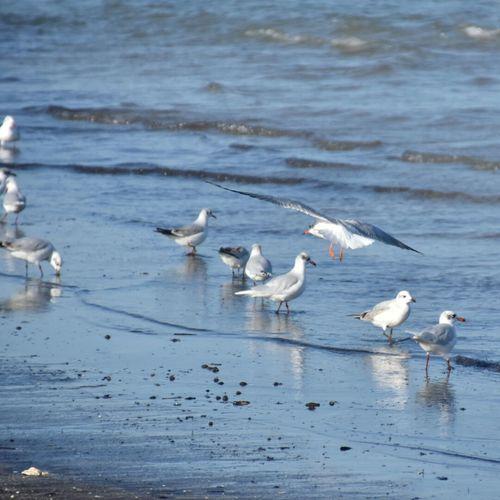 Seagulls on shore at beach