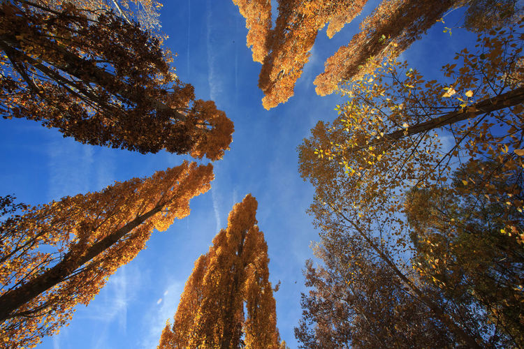 Autumn Beauty In Nature Branch Cloud - Sky Low Angle View NatureScenics Plant Forest Autumn Leaves Auto No People Outdoors Sky Tree Cenital View Dramatic Angles Yellow