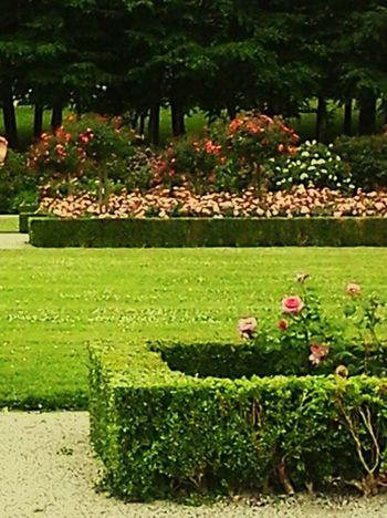 Eu Jardins Fleurs Arbustes Green Rose♥ Herbes Vert