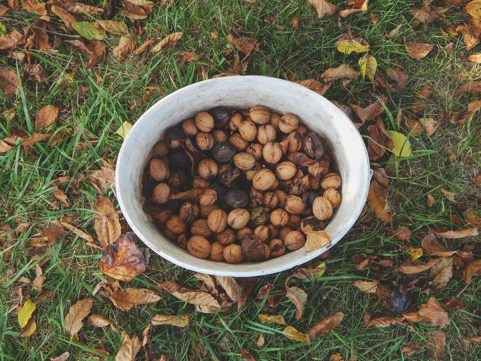 A bucket of walnuts, collected at autumn in garden. Outdoor Natural Abstract Garden Grass Leaf Leaves Autumn Autumn Leaves Bucket Directly Above High Angle View Close-up Food And Drink Nutshell Walnut Nut Nut - Food The Still Life Photographer - 2018 EyeEm Awards Autumn Mood
