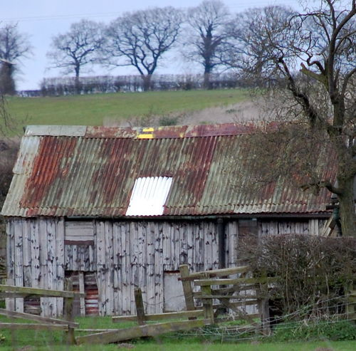 Abandoned Architecture Bare Tree Building Exterior Built Structure Corrugated Iron Day Grass House Nature No People Outdoors Roof Rural Scene Shed Roof Sky Tree