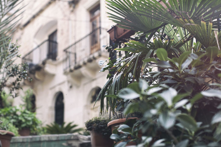 Architecture B Balcony Building Day EyeEm Best Edits EyeEm Best Shots EyeEm Gallery Front Or Back Yard House Leaf Malaysia Outdoors Palm Leaf Palm Trees Plant Potted Plant Residential Structure Showcase April Tree Window