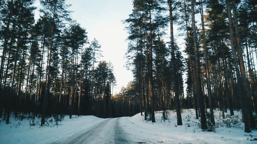 Winter in Lithuania // Tree Snow Winter Cold Temperature Nature Beauty In Nature Forest Landscape Tranquility Outdoors No People Winter Wanderlust Travelphotography Snow Day Snow Covered Nature Travel Destinations Snow ❄ Lithuania Lithuania Nature <3 Tree Sunny☀ Beauty In Nature Forest View