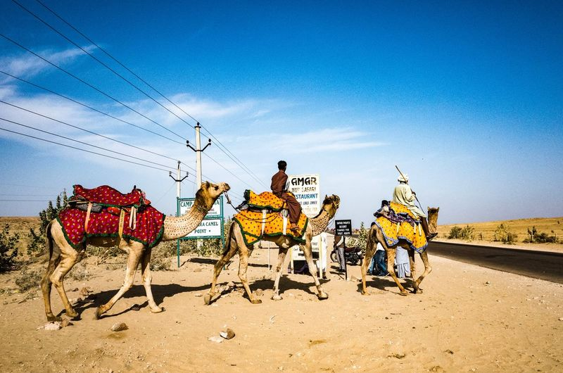 Camel Animal Animal Themes Camel Dunes Sky Sand Outdoors Transportation Vacations Sitting Travel Destinations Day Nature Adult Adults Only The Street Photographer - 2018 EyeEm Awards