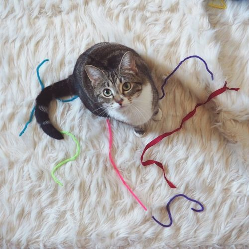 Robin the Kitty likes her Pipecleaners... Cute Pets Love My Cat 😚 Green Eyes Cat
