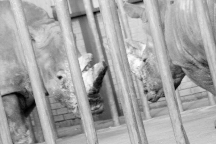 Rhinoceros Beautifulanimals