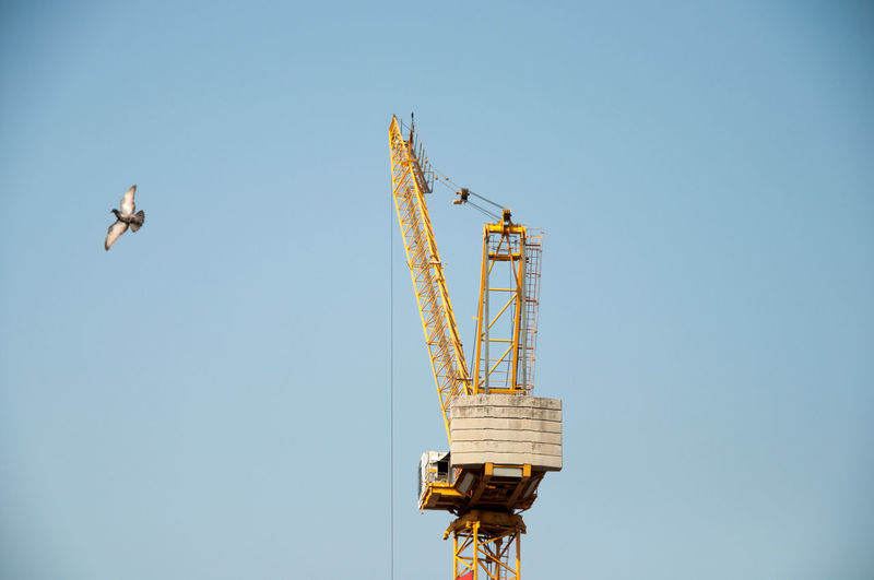 Animal Themes Bird Blue Built Structure Clear Sky Communication Construction Site Copy Space Crane Crane - Construction Machinery Day Development Low Angle View Metal No People Outdoors Sky Tall - High Technology Transportation