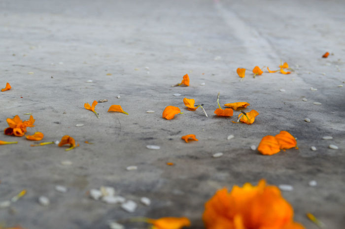Orange Color Nature No People Outdoors Fragility Close-up Surface Level Freshness Day Petals On The Floor Flower Petals On The Floor Rice Grains And Flower Petals Still Life Religious Offering Kathmandu, Nepal Travel Travel Photography Place Of Worship Travel Destinations Spirituality