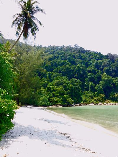 Jungle Beach