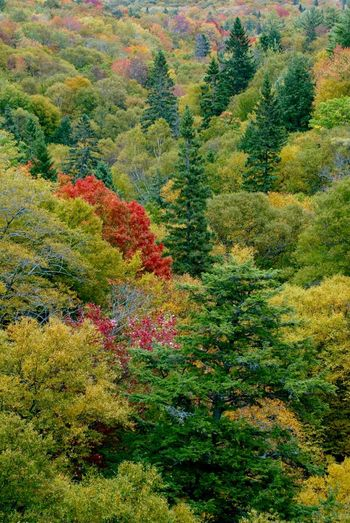 Beauty In Nature Day Fall Colors Landscape_Collection Landscape_photography Multi Colored Nature No People Outdoors Scenics Tree