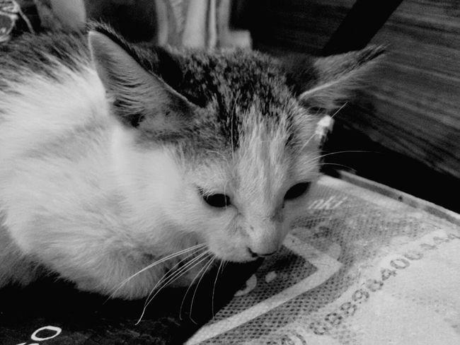 Winter Cat Mobilephotography Black & White EyEmNewHere