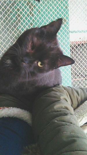 Cat Schronisko Lovely