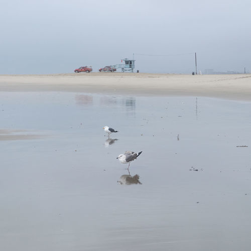 Reflection Seagulls Bird Nature Ocean Outdoors Seagulls And Sea Water