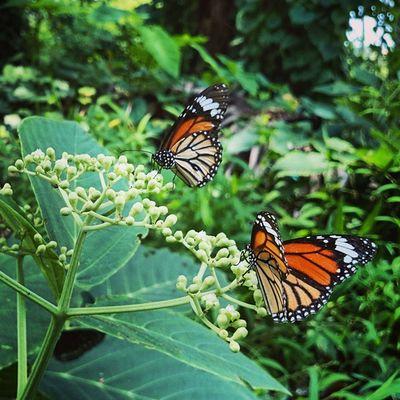 Butterflieseverywhere Travel Naturetrippin Xperiaz2