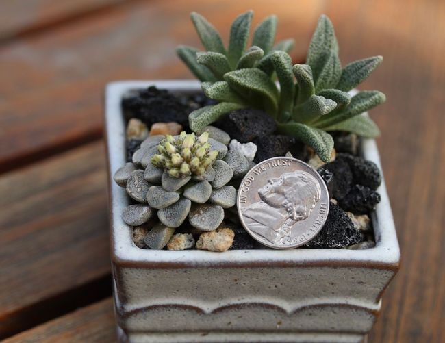 Close-Up Of Coin In Potted Plant On Table