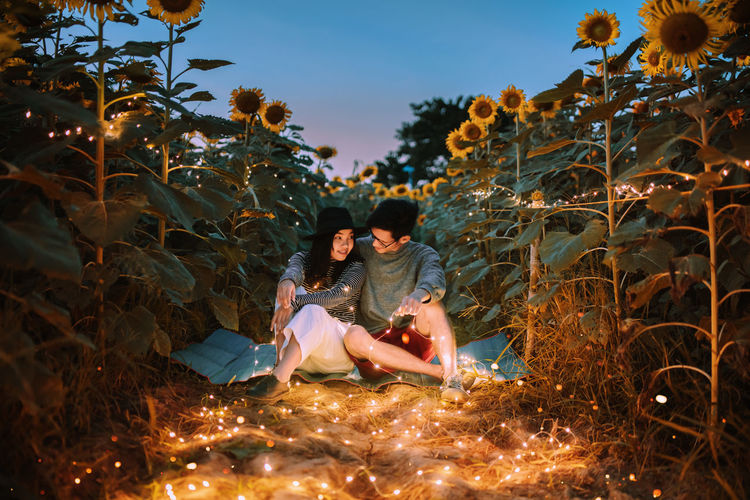 You cheer me up like a sunflower.🌻🌻🌻. Lovers Sweet in Sunflower Fields with Fairy Lights. People Summer Lights Nature Real People Men Light Sunflower Sky Love Women Sitting Light And Shadow Celebration Lighthouse Plant Adult Lifestyles Young Adult Full Length Two People Young Women Lighting Equipment Leisure Activity Couple - Relationship