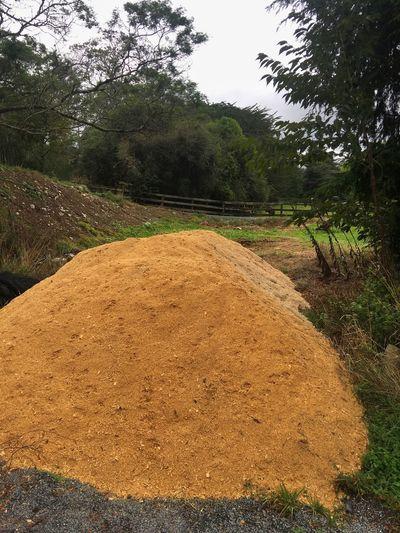 Giant pile of saw dust outside Sawdust Tree Land Landscape Outdoors Farm Rural Scene