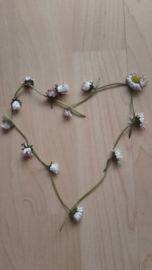 Love Love Heart Heart Shape Daisy Daisies Daisy Chain Daisy Chains  Flowers Flower Collection Wild Flowers Wildflowers Wild Flower Simplicity Laminate Flowering Laminate Flooring Wildflower Flower Daisychain Daisy Flower Memories Of Childhood Childhood Memories Love Flowers Flower Art Flower Arrangement
