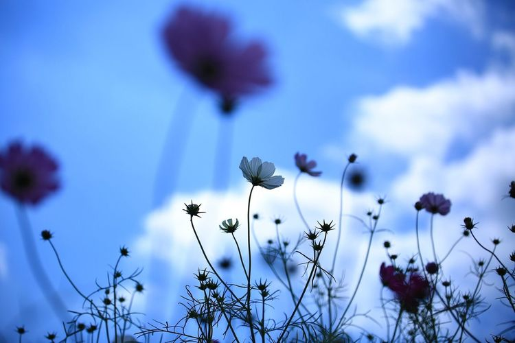 Close-up of flowers against sky