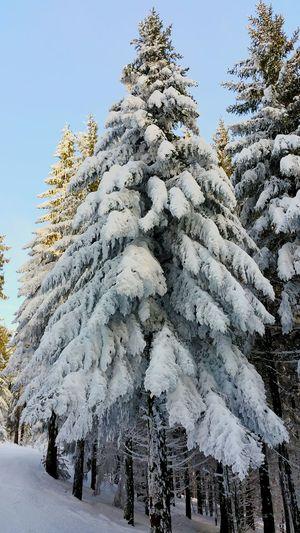 Winter First