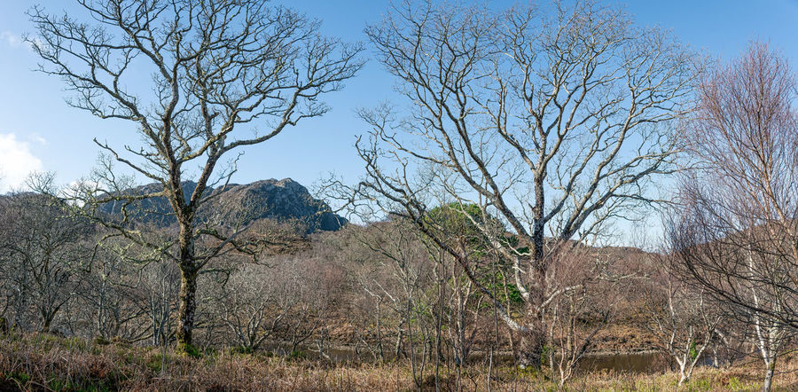 Beauty In Nature Countryside Uk Day Leafless Trees Mosses And Lichens Mountain No People Photo Merge Photography Trees And Sky