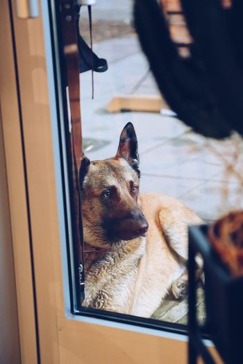 High angle view of dog looking through window