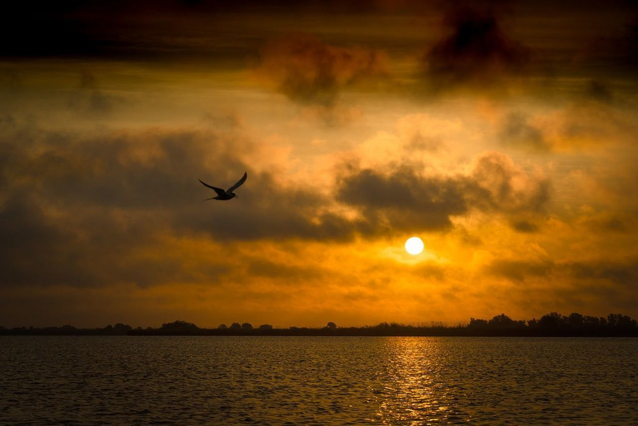 sunset, silhouette, nature, beauty in nature, sky, scenics, tranquility, water, orange color, flying, tranquil scene, cloud - sky, no people, sea, outdoors, sun, tree, bird, animal themes