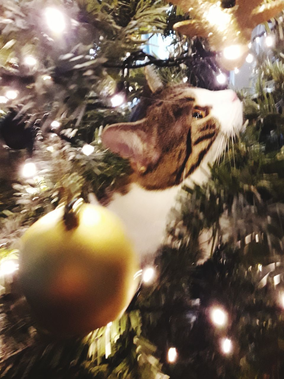 one animal, animal themes, close-up, no people, christmas, christmas tree, low angle view, tree, indoors, christmas ornament, christmas decoration, animals in the wild, nature, day