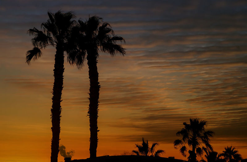 Silhouetted Miami palms trees with colorful sunsets Palm Tree Sky Sunset Tropical Climate Silhouette Beauty In Nature Coconut Palm Tree Scenics - Nature Arizona Desert Arizona Sunsets Arizona Mountain Landscape California Phoenix, AZ Phoenix Phoenix Arizona Sundown Sundown Landscape Yuma, AZ Yuma Sundown Arizona Southwestern Usa