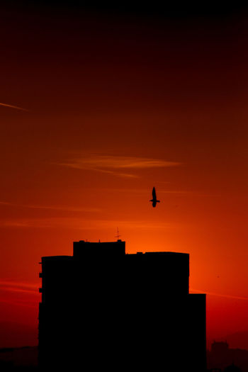 Silhouette of a building and a bird flying against orange sky