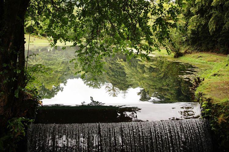 Azores Jardim Beatriz Do Canto Landscape Furnas Nature