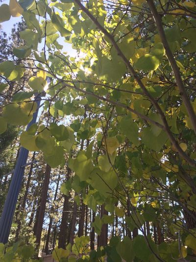 Tree Nature Growth Low Angle View Forest Leaf Day EyeEmNewHere