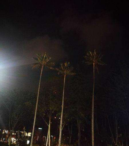 palmeras parque
