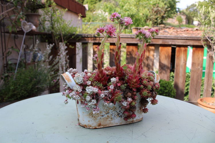 Close-up of potted plant on table in yard