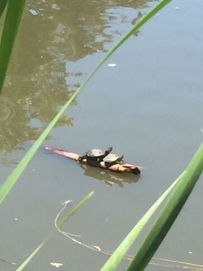 Even the turtles get a sun tan