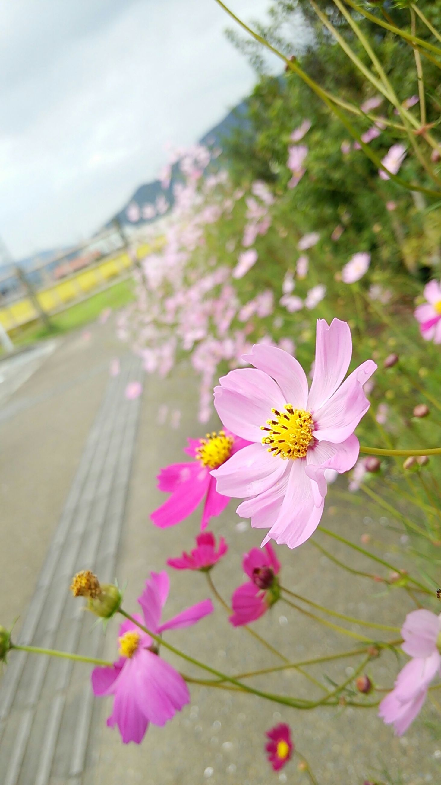 flower, freshness, petal, fragility, flower head, pink color, insect, growth, beauty in nature, one animal, animal themes, focus on foreground, pollen, nature, blooming, close-up, animals in the wild, plant, wildlife, pollination