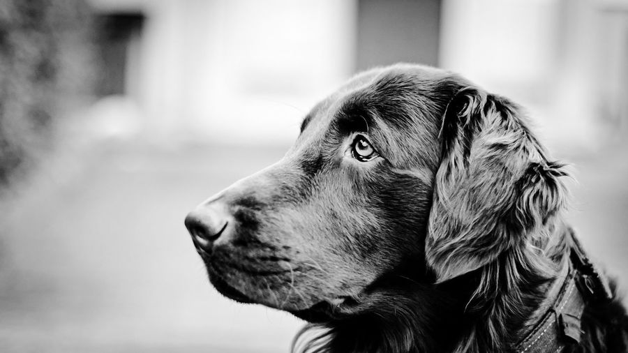 Bw_portraits Blackandwhite Dog Monochrome Animal Animal Themes Dogs Of EyeEm Portrait Portrait Photography Taking Photos Check This Out Hello World Hi! EyeEm Pet Portraits