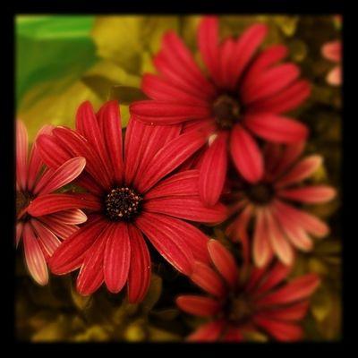 #flower #lobo_flowers Flower Lobo_flowers